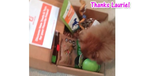 Happy Dog Box Monthly Subscription Box