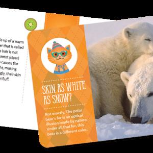 Kiwibop Postcard Pals Subscription