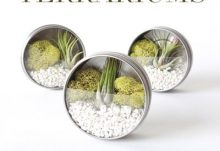 Darby Smart Mini Magnetic Terrarium