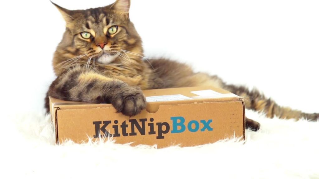 Kitnipbox A Monthly Box Of Cat Toys Treats Accessories