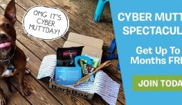Cyber Monday 2014: 12/1 Only! Get Up to 3 BarkBoxes FREE with Code AFF123