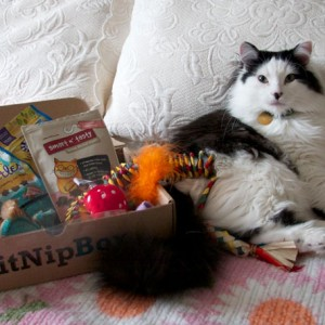 KitNipBox - For the Mom with Cats
