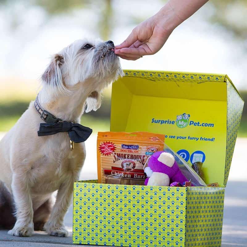 Surprise My Pet Find Subscription Boxes