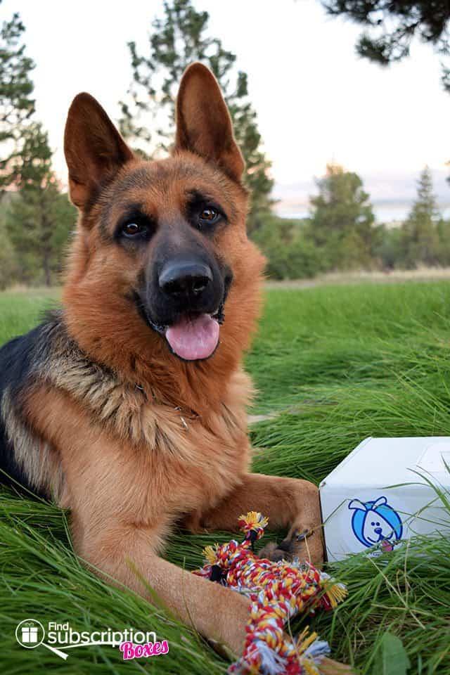 True Drool May 2015 Box Review - Dog