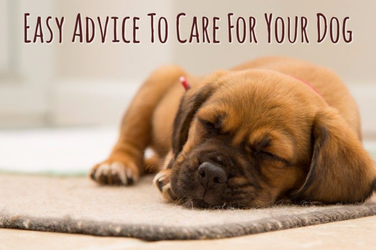 Easy Advice to Care For Your Dog
