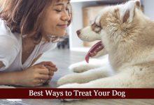 Best Ways to Treat Your Dog