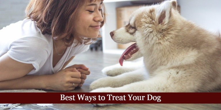 Best Ways to Treat Your Dog