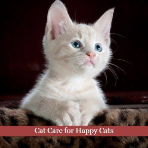 Cat Care for Happy Cats