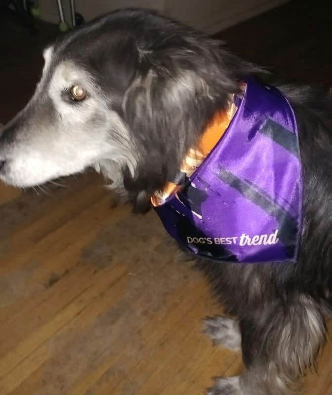 November 2016 Dog's Best Trend Review - Autumn