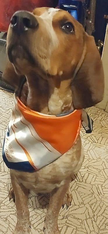 November 2016 Dog's Best Trend Review - Pipp