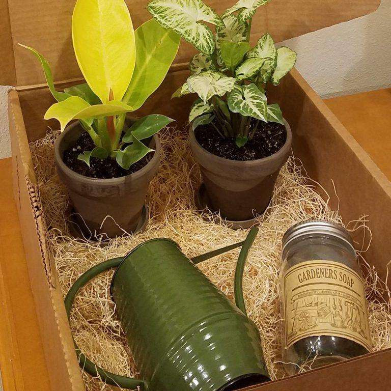 My Garden Box