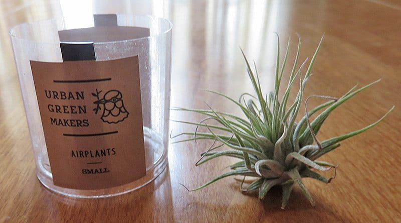 April 2017 GlobeIn Sustain Artisan Box Review - Air Plant