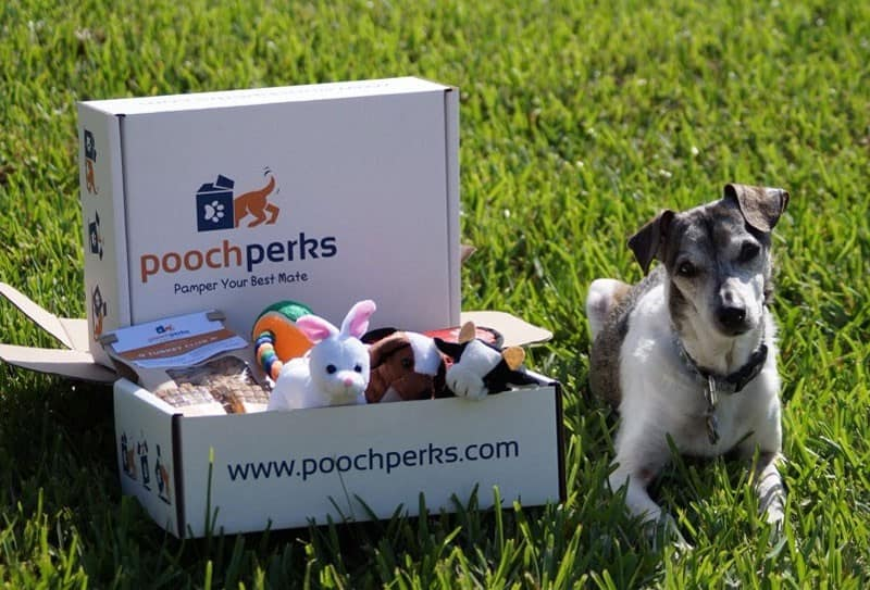 Pooch Perks Find Subscription Boxes