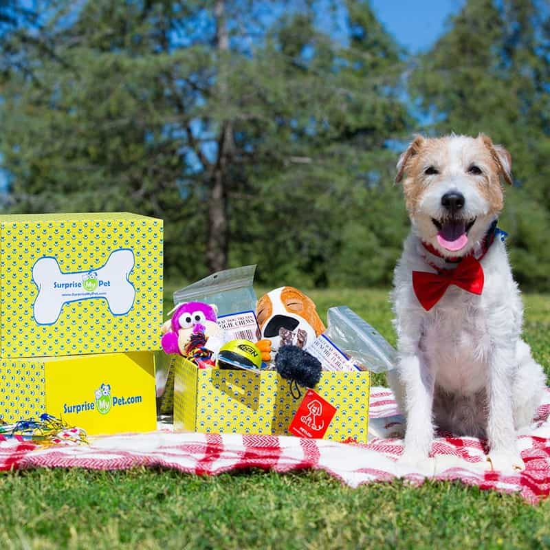 Surprise My Pet Subscription Box for Dogs